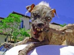 angrydoggie.jpg