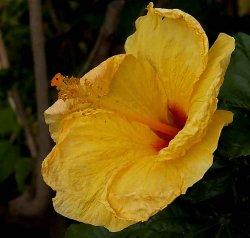 Hawaii~Maui Pictures original.jpg
