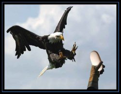 eagle catching mighty mouse.jpg
