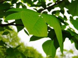 leaf edited.jpg