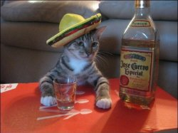 tequilakitty.jpg
