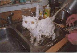 miserable_cat.jpg
