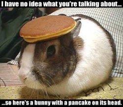 pancakebunny.jpg