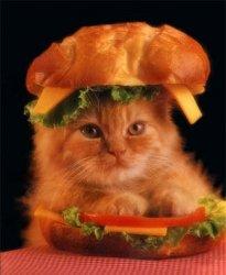 cat sandwich! -28.jpg
