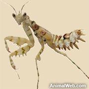preying-mantis.jpg
