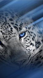 Leopard-iP5.jpg