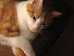 Cat2b.jpg