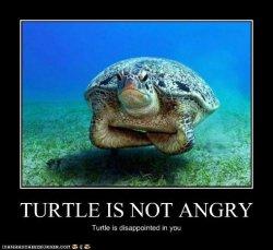 Angry Turtle.jpg