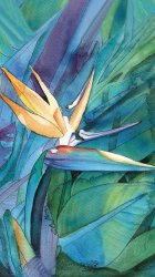 Bird of Paradise watercolor.jpg