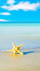 Starfish Beach.jpg