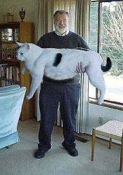 cat-fc-3.jpg