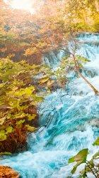 Trees Water 01.jpg