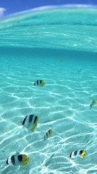 Tropical Fish.jpg