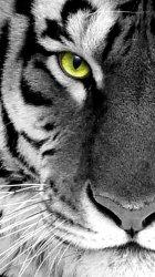 White Tiger 01.jpg