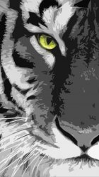 White Tiger 02.jpg