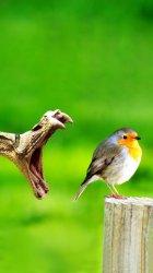 Snake Bird.jpg