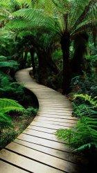 Jungle Path.jpg