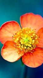 Flower closeup.jpg