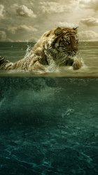 Tiger Water.jpg