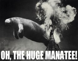 oh-the-huge-manatee.jpg