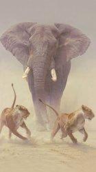 Elephant Lions.jpg