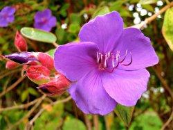 flower-sharp.jpg