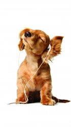 Musical Dog.jpg