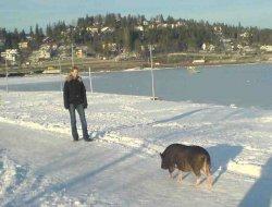 Pig on snow.jpg