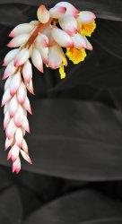 Flower - edge - BW submit.jpg