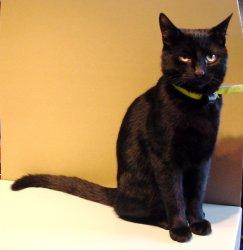 Panther-cat.jpg