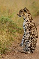 South Africa 7.jpg