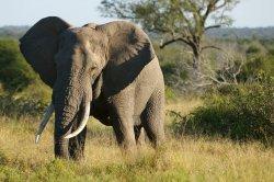 South Africa 11.jpg