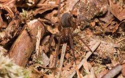 spiderwallp1.jpg