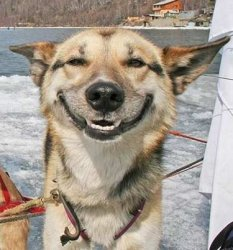 happydog2.jpg