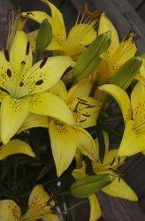 Yellow_Flower.jpg