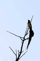 bird_cs(20D_20060619_0758).jpg