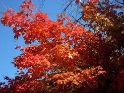 Fall06_01.jpg