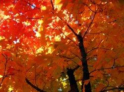 fall06_02.jpg