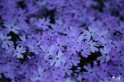 bluepurple.jpg