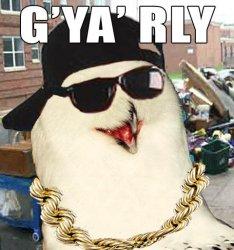 Owl - GYaRly.jpg