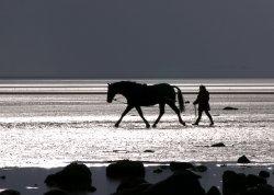 Horse on beach.jpg