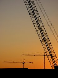 cranes_2337.jpg