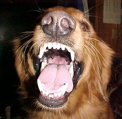fpmeandog.jpg
