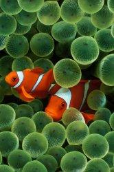 ClownfishIphone.jpg