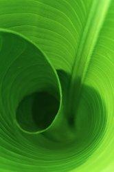 LeafcurliPhone.jpg