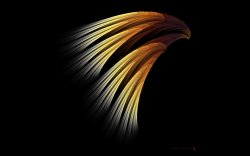 eagles-16-8.jpg