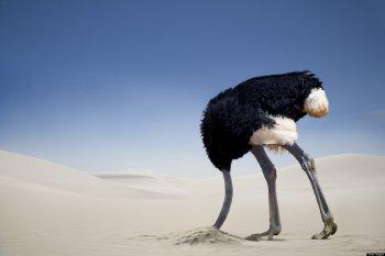 ostrich-in-sand[1].jpg