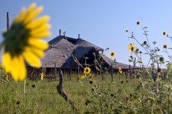 sunflower-house.jpg