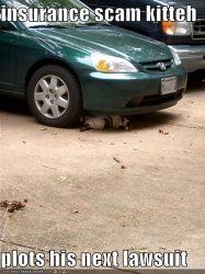 funny-pictures-insurance-fraud-cat-car-tires.jpg