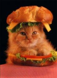 Cat Burger.jpg